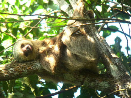 Panama Nature & Wildlife Vacations: Jungle Tours | Panama Travel Consultants