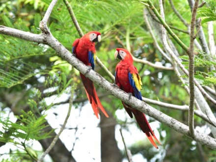 Ultimate Costa Rica Nature & Beaches | Experience Costa Rica Vacation Package